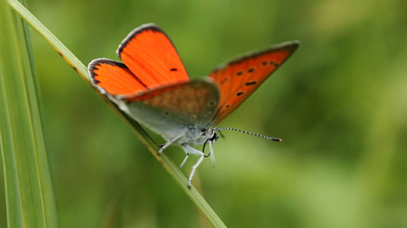 O¦é papillons_ BD