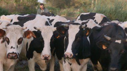 ECOLLYWOODLe veau, la vache et le territoire_web